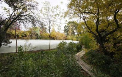 Близость к природе — офис Selgascano Arquitectos