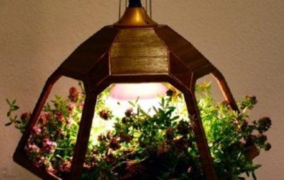 Как выбрать флористический светильник