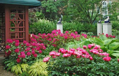 Цветы на даче с названиями — фото