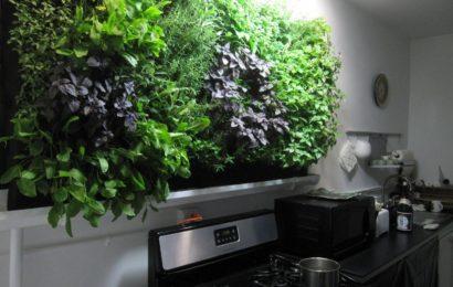 Что такое гидропонный сад?