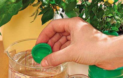 Циркон для растений