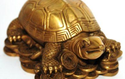Что символизирует черепаха в фен-шуй?