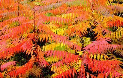 Выбор растений для осеннего сада