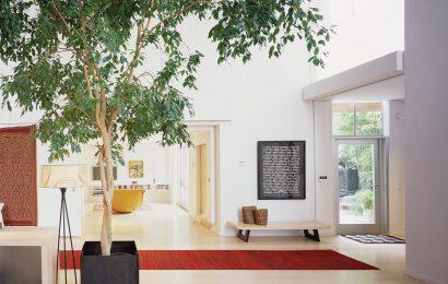 Фикус: уход в домашних условиях, фото и названия разновидностей