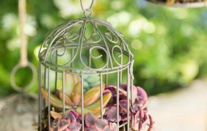 Выращиваем суккуленты в декоративных птичьих клетках