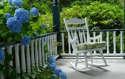 Гортензия — садовая принцесса. Всё о посадке, уходе и популярных сортах