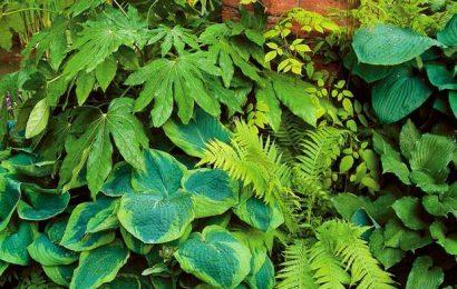 7 тенелюбивых растений, которые украсят ваш сад