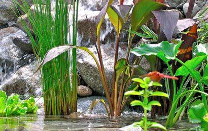 Как выбрать водные растения для пруда