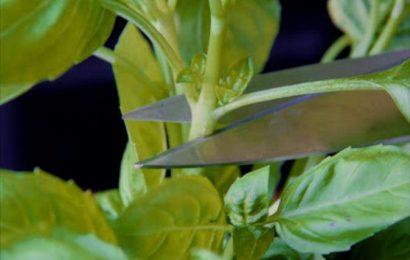 Основы размножения растений для начинающих садоводов