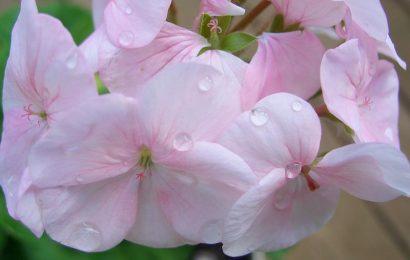 Тенелюбивые растения, которые цветут все лето