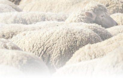 Особенности одежды из натуральной овечьей шерсти